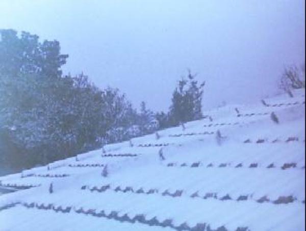 Neve no Telhado de Casa em Curitiba em 1975